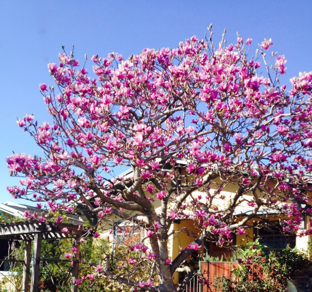 Aesthetic Pruning Flowering Trees & Shrubs class