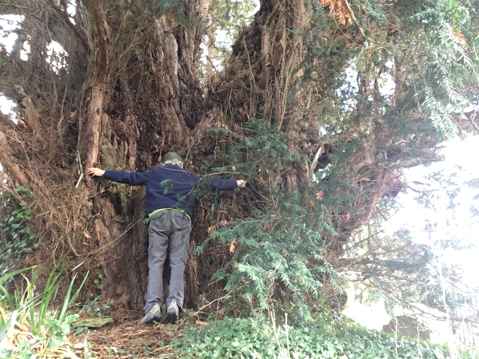 Crowhurst Yew, St Georges' Church in Crowhurst, about 4,000 years old and 11 hugs.