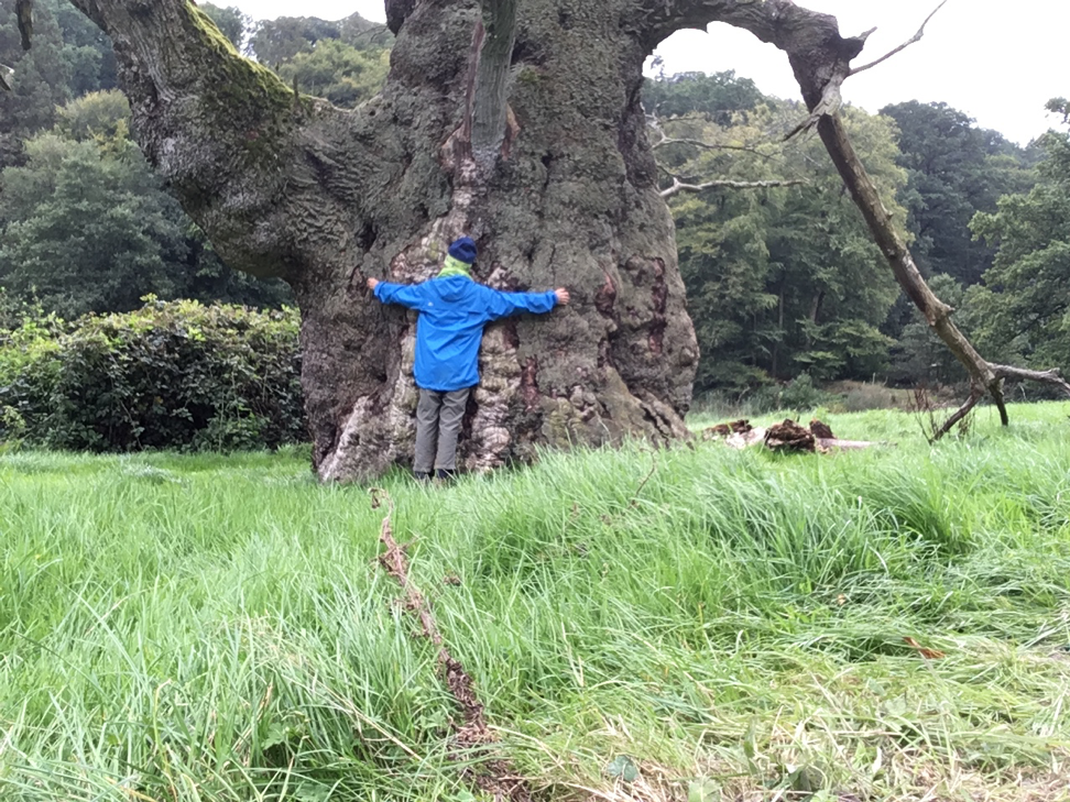 Nice old oak with its own prop