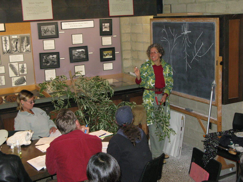 Lecture portion on pruning